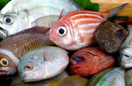 Photo for Mix colorful sea fishes from fishery market with studio lighting. - Royalty Free Image