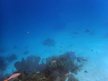 Photo pour underwater view of a big reef with small fish - image libre de droit