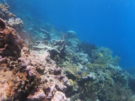 Photo pour slope on water, with corals and small fish in the far - image libre de droit