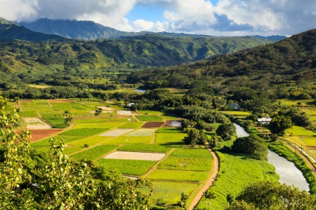 Taro fields in Hanalei Valley, Kauai.