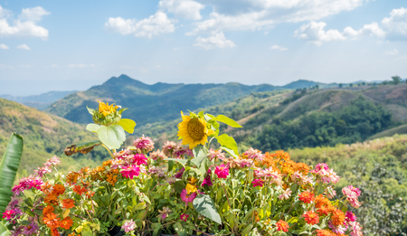 Colorful flowers with mountain view background at Khao Kho,Phetchabun Province,northern Thailand.