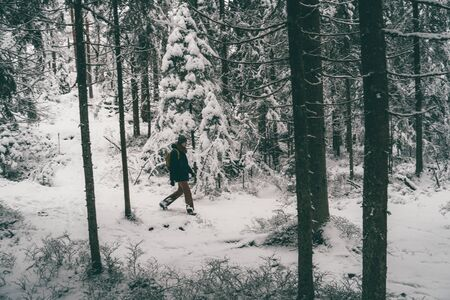Photo for Photo from afar of male tourist walking in winter forest . - Royalty Free Image