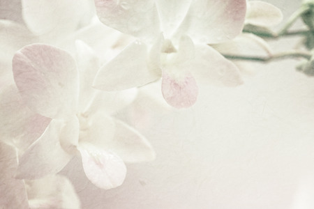 sweet orchids on mulberry paper texture for background