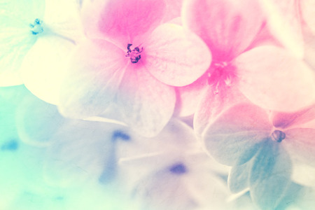sweet color flowers in soft and blur style on mulberry paper texture for background