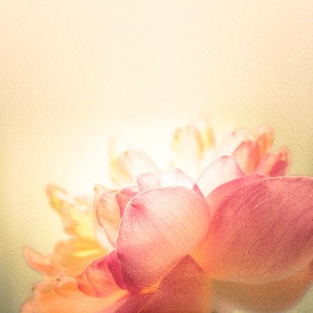 Foto de sweet color lotus in soft color and blur style on mulberry paper texture - Imagen libre de derechos