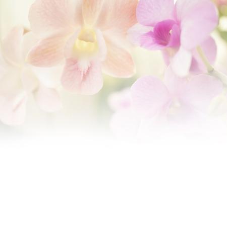 Sweet color blur flower for background