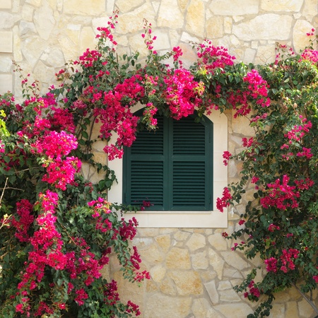 Closed window surrounded by bougainvillea