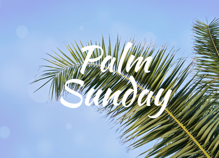 Photo for Palm leaf against blue sky with text Palm Sunday - Royalty Free Image
