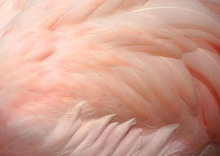 Foto de Pink flamingo feathers delicate soft for background. - Imagen libre de derechos