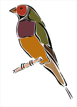 drawing of a bird in a branch