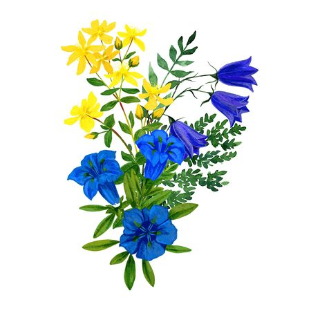 Illustration for Wild flowers bouquet, blue and yellow tints, st. johns wort gentian - Royalty Free Image