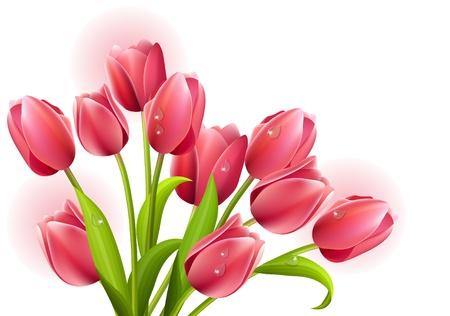 Bunch of tulips isolated