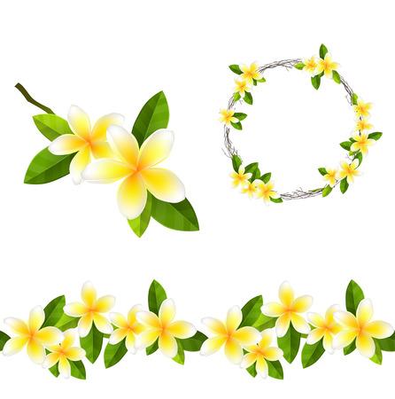 Illustration pour Blossoming branch of frangipani tree. Endless pattern brush, round garland. - image libre de droit