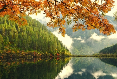 Autumn tree and lake in China