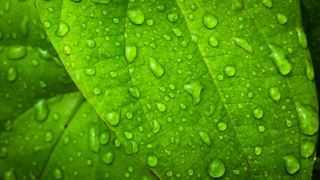 Photo pour water drop on Green leaf background abstract of nature - image libre de droit