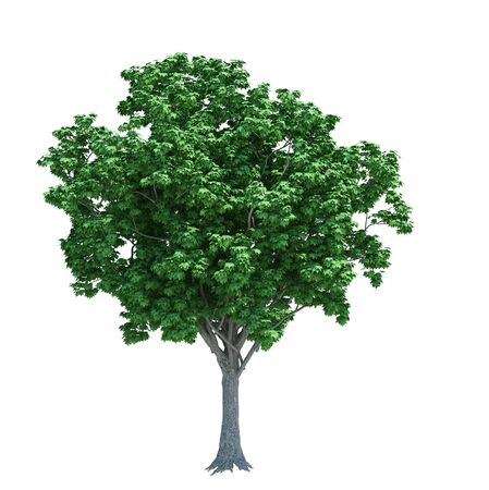 Photo pour Nature object tree isolated  white on background - image libre de droit