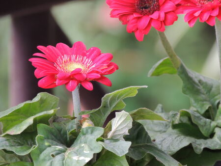 nature red flower