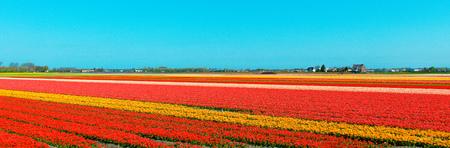 Amazing Netherlands Landscape