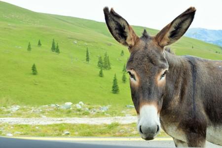 Foto de Donkey in the mountains Parang, Romania. - Imagen libre de derechos