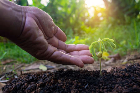 Photo pour Hand touching growing plant,Young plant and hand under sunlight.Finger and Small plants on the ground in spring.New life concept.Fresh.Photo fresh and Agriculture  concept idea. - image libre de droit