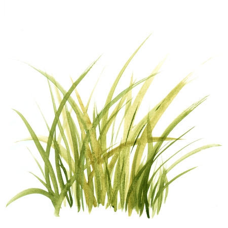 Green grass. Floral background.