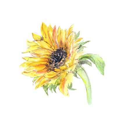 Photo pour Drawing sunflower. Yellow sunny flower. - image libre de droit