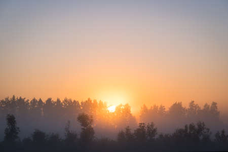 Photo for Orange sun rising behind the trees, a meadow covered with dense fog. The golden hour, misty morning. Beautiful misty sunrise landscape. Foggy morning with trees through the dense fog. - Royalty Free Image