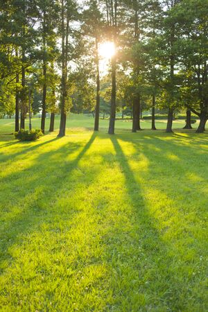 Foto de morning garden - Imagen libre de derechos