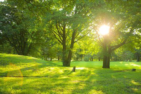 Photo pour sunshine park - image libre de droit