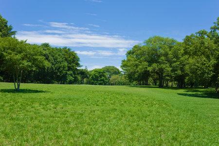 Foto de green park - Imagen libre de derechos