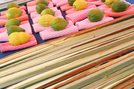 Jewish citrons & ceremonial palm frond display, Sukkot - Tabernacles