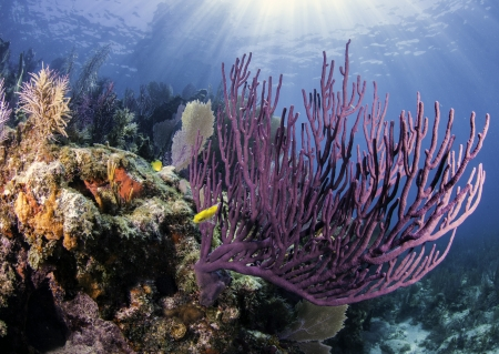 Coral Reefs of North America
