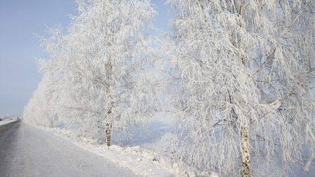 winter landscape - trees in white sparkling snow under the rays of the sun