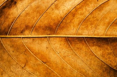 Photo pour Dried leaf texture background  - image libre de droit