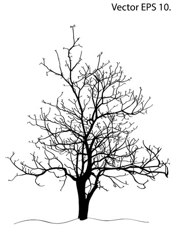 Dead Tree without Leaves Vector Illustration Sketched, EPS 10 のイラスト素材