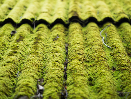 Green moss growing on old roof tiles