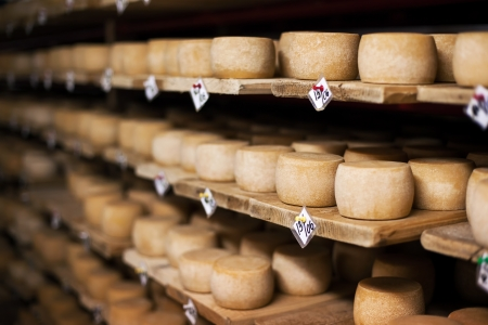 Cow milk cheese, stored in a wooden shelves and left to mature