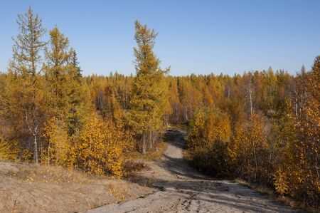 Autumn soft lands?ape with forest in green, yellow and brown colors. Trees of birch, larch, spruce, fir, pine and cedar. Gold autumn wood