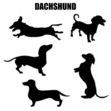 Illustration for Dachshund dog vector icons and silhouettes. Set of illustrations in different poses. - Royalty Free Image