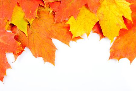 Photo pour Maple leaves frame isolated on white background - image libre de droit