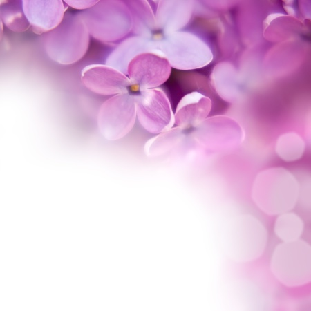 close up beautiful lilac background with light violet flowers