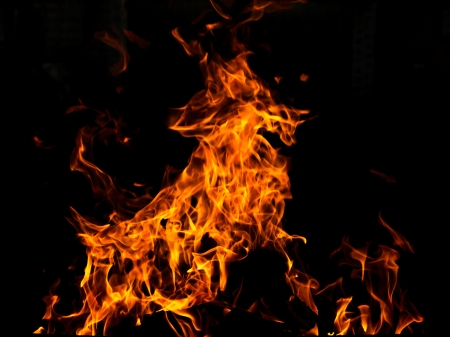 Abstract fire animal over black background