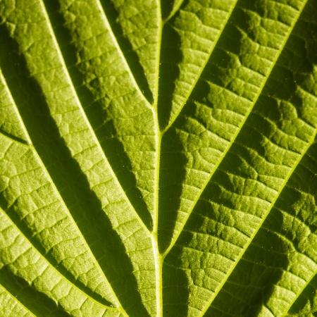 green leaf macro with deep