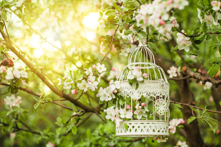 Photo for Bird cage on the apple blossom tree in sunset. - Royalty Free Image