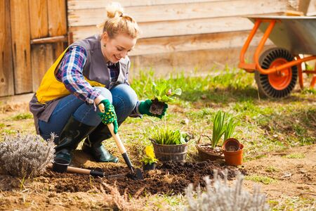 Photo for Woman is planting or working on flower bed - Royalty Free Image
