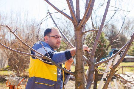 Foto für Young man pruning tree in the garden - Lizenzfreies Bild
