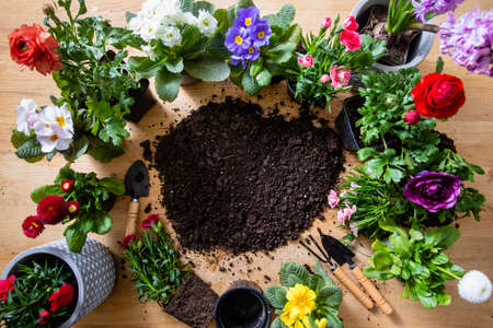 Photo for Top view of various flowers in pots stand around the soil - Royalty Free Image
