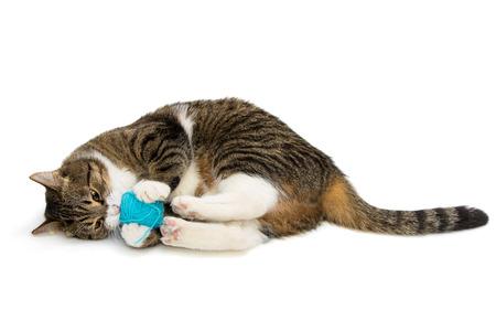 Gray tabby cat plays ball of wool