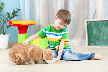 child boy feeding red cat at home