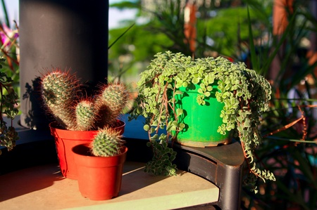 Beautiful house plant and cactuses in pots at sunset